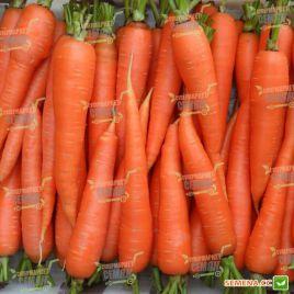 ТС 09- 0210 (TS 09- 0210) семена моркови Шантане среднеранней 105-110дн (Solare Sementi)
