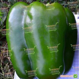 TS 09-0592 F1 семена перца сладкого (Solare Sementi)