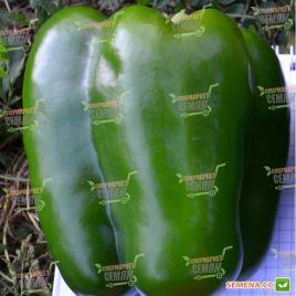 ТС 09-0592 F1 (TS 09-0592 F1) семена перца сладкого тип Блочный раннего корот.куб. 230-250г. зел./красн. (Solare Sementi)