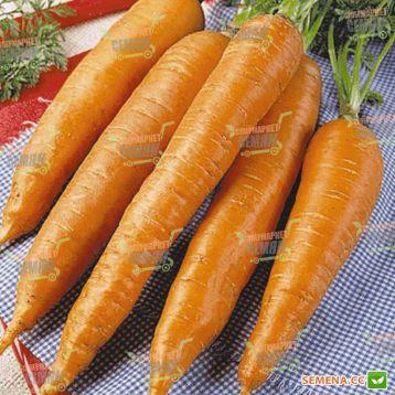 Флакке семена моркови (Servise plus (GSN)