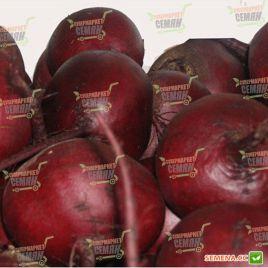 Красный шар семена свеклы столовой окр. (Servise plus (GSN)