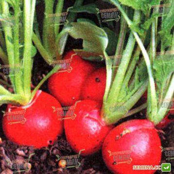 Кругла Скарлет семена редиса 28-42 дн. (Servise plus (GSN) СДБ) НЕТ ТОВАРА