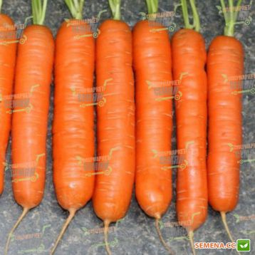 Нантская семена моркови Нантес (Servise plus (GSN)