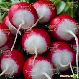 Национал семена редиса (Servise plus (GSN)