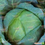 Бирюза семена капусты б/к поздней (Satimex)