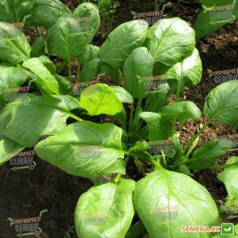 Бос семена шпината (Satimex)