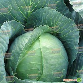 Брауншвайгер семена капусты б/к средней среднеранней 85-100 дн 2,5-3 кг (Satimex)