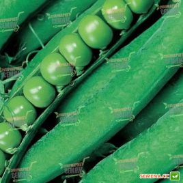 Динга семена гороха мозгового овощного раннего 50 дн (Satimex КЛ)