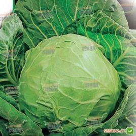 Дитмаршер Фрюер семена капусты б/к ранней 55-60 дн 1-1,3 кг (Satimex КЛ)