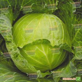 Июньская семена капусты б/к ранней 92-100 дн. 1-2,5 кг (Satimex СДБ)