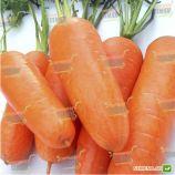 Кампино семена моркови Флакке (Satimex)