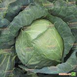 Копенгаген маркет семена капусты б/к средней (Satimex)