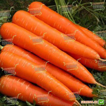Красная Боярыня семена моркови (SX)
