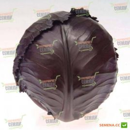 Топарани семена капусты к/к ранней 1,3-1,8 кг окр. (Satimex СДБ)
