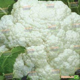 Униботра семена капусты цветной (SX)