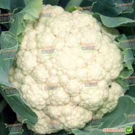 Униботра семена капусты цветной средней 80-90 дн. 2-2,5 кг бел. (Satimex СДБ)
