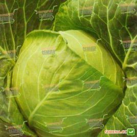 Золотой Акр семена капусты б/к средней среднепоздний 115 дн 2,5 кг (Satimex КЛ)