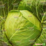 Золотой Акр семена капусты б/к ранней 65-70 дн 1,5-1,7 кг окр. (Satimex КЛ)