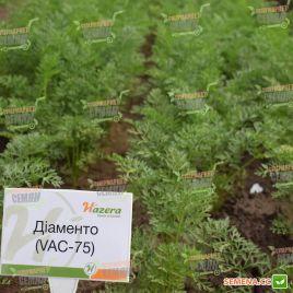 Диаменто F1 (VAC 75 F1) семена моркови Шантане среднеспелой 100-110 дн. (Vilmorin)