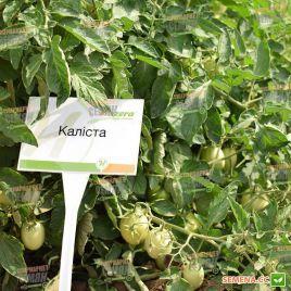 Калиста F1 семена томата дет. раннего 85-90 дн. слив. 70-80 гр. (Hazera)