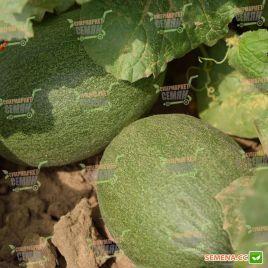 Мейрон F1 семена дыни тип Ананас среднеранней 60-65 дн. 2-4 кг овал. оран./бел. (Hazera)