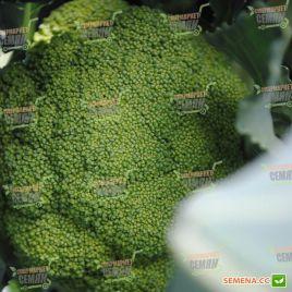 Агаси F1 (Агасси F1) семена капусты брокколи ранней 65-75 дн. (калибр.) (Rijk Zwaan)