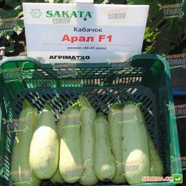 Арал F1 семена кабачка сверхраннего 30-35дн. светло-зеленого (Sakata)