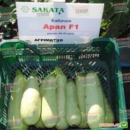 Арал F1 семена кабачка ультрараннего 30-35дн. светло-зеленого (Sakata)