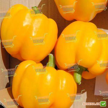 Бачата F1 семена перца сладкого тип Блочный среднего корот.куб. 300-350гр. 9х8см 8-10 мм зел./желт. (Rijk Zwaan)