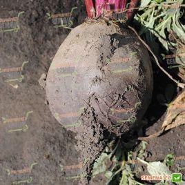 Бетина семена свеклы столовой поздней 120 дн окр. (Moravoseed)