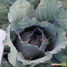 Варна F1 семена капусты к/к поздней 110-120 дн. 2-3 кг (Sakata)