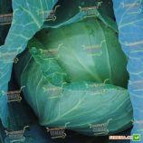 Глория F1 семена капусты б/к средней (Syngenta)