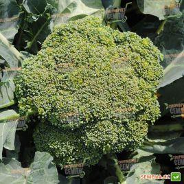 Грин Меджик F1 семена капусты брокколи ранней 60-65 дн. 0,4-0,6кг (Sakata)