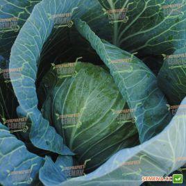 Девотор F1 семена капусты б/к средне-поздней 105-110 дн. 3,5-4 кг (Syngenta)