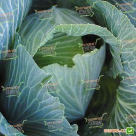 Зенон F1 семена капусты б/к поздней 125-130 дн. 3-4 кг окр. (Syngenta)