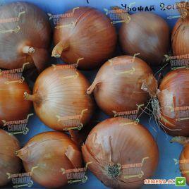 Империос F1 (Дамла F1) семена лука репчатого среднепозднего 115 дн (Lark Seeds)