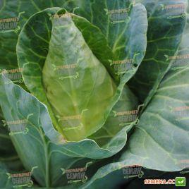 Карафлекс F1 семена капусты конической ранней 76дн 1,5-2,5кг (Bejo)