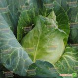 Карафлекс F1 семена капусты конической ранней 76 дн. 1,5-2,5 кг зел. (Bejo)