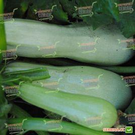 Каризма F1 семена кабачка (Syngenta)