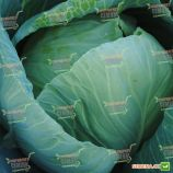 Килагерб F1 семена капусты б/к среднепоздней (Syngenta)