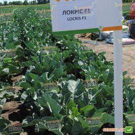Локрис F1 семена капусты цветной средней 80-85 дн. 1,5-2 кг бел. (Vilmorin)