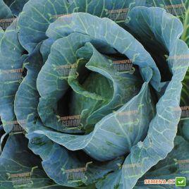 Монро F1 семена капусты б/к среднепоздней 110-120 дней (Sakata)