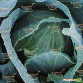 Монро F1 семена капусты б/к среднепоздней 110-120 дн. 2,2-4,5 кг (Sakata)