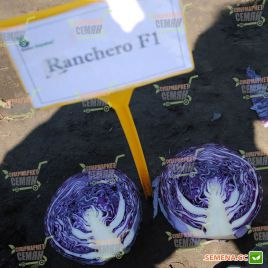 Ранчеро F1 семена капусты к/к средней 75-78 дн. 3 кг окр. (Bejo)