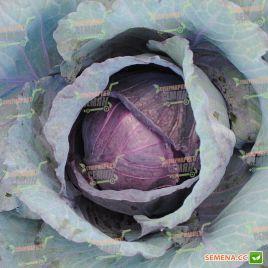 Рэд Династи F1 (Red Dynasty F1) семена капусты к/к ранней 70-75 дн 1,5-2 кг (Seminis)