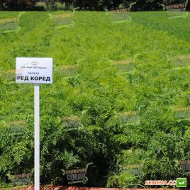 Ред Коред семена моркови Шантане среднеранней 100-110 дн (Lark Seeds)