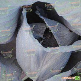 Рокси F1 (Roxy F1) семена капусты к/к поздней 125-135 дн 2-3,5 кг окр.-прип. (Seminis)