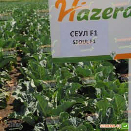 Сеул F1 семена капусты цветной средней 70-75 дн. 1-2 кг бел. (Hazera)