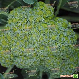 Стромболи F1 семена капусты брокколи ранней (Hazera)
