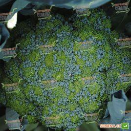 Тритон F1 семена капусты брокколи средней 78-83 дн. 0,4-0,6 кг (Sakata)